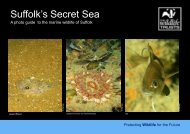 Suffolk's Living Sea - the North Sea Wildlife Project