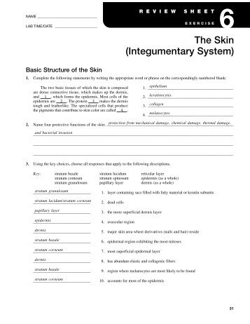 the integumentary system chapter 7 review sheet Integumentary system chapter 7 review sheet essays , the integumentary system chapter 7 review sheet bio 137 human anatomy and physiology i chapter 5 review.