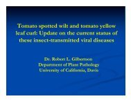 Tomato spotted wilt and tomato yellow leaf curl ... - Yolo County