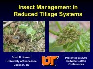 Insect Management in Reduced Tillage Systems - UTcrops.com