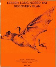 LESSER LONG-NOSED BAT - U.S. Fish and Wildlife Service
