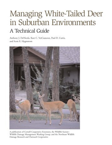 Managing White-Tailed Deer in Suburban Environments