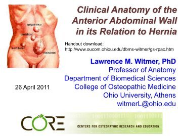 Clinical anatomy of the anterior abdominal wall in - Ohio University ...
