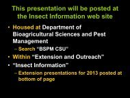 Insect Update - Bioagricultural Sciences and Pest Management ...