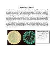 Luminescent Bacteria