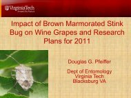 Impact of BMSB on Wine Grapes and Research