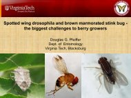 Spotted wing drosophila and brown marmorated stink bug - the ...