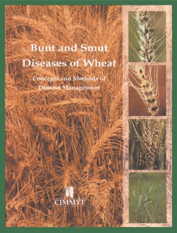 Bunt and Smut Diseases of Wheat - CIMMYT