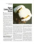 How a Cotton Plant Grows - eXtension - Page 2