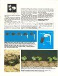 How a Cotton Plant Grows - eXtension - Page 3