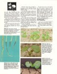 How a Cotton Plant Grows - eXtension - Page 5