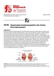 HCM: Hypertrophe Kardiomyopathie (der Katze ... - Labor Laupeneck