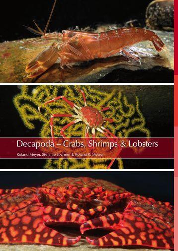 Decapoda - Marine Benthic Fauna of Chilean Patagonia