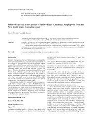 Iphimedia poorei, a new species of Iphimediidae ... - Museum Victoria