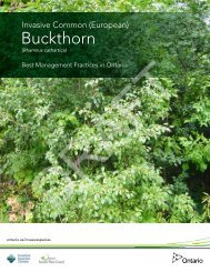 Invasive Common (European) Buckthorn - Invading Species