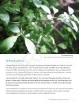 Invasive Common (European) Buckthorn - Invading Species - Page 4