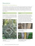 Invasive Common (European) Buckthorn - Invading Species - Page 5