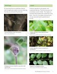 Invasive Common (European) Buckthorn - Invading Species - Page 6