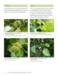 Invasive Common (European) Buckthorn - Invading Species - Page 7