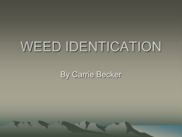 WEED IDENTICATION