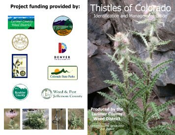 Thistles of Colorado - Summit County Government