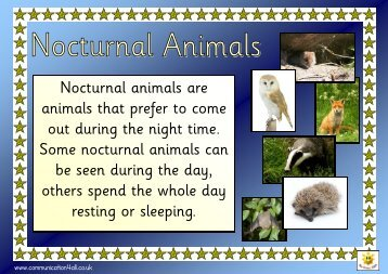 Nocturnal animal fact pack - Communication4All