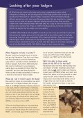 Living with bats - Bat Conservation Trust - Page 3