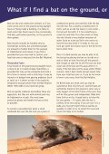 Living with bats - Bat Conservation Trust - Page 6