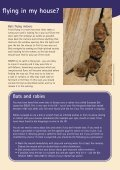 Living with bats - Bat Conservation Trust - Page 7