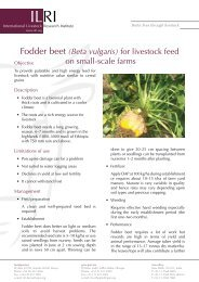 Fodder beet (Beta vulgaris) for livestock feed on small-scale farms