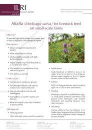 Alfalfa (Medicago sativa) for livestock feed on small-scale farms
