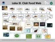 Lake St. Clair Food Web N - GLERL - NOAA