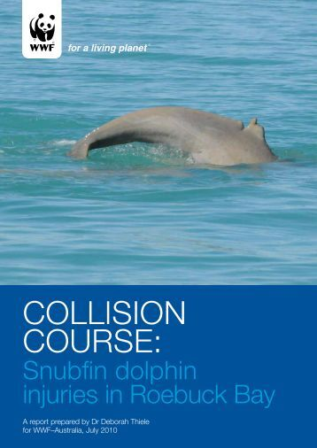 Snubfin dolphin injuries in Roebuck Bay - wwf - Australia