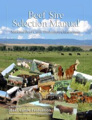 NBCEC Beef Sire Selection Manual - Department of Animal Science ...