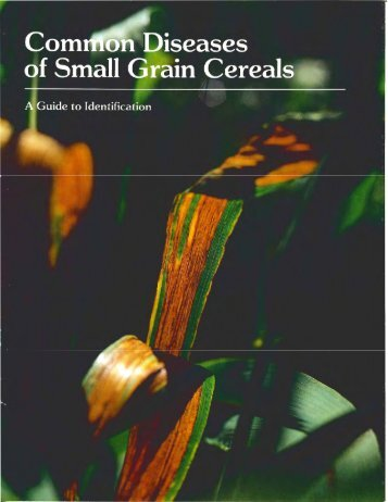 CIMMYT - A Common Diseases of Small Grain Cereals