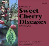 Field Guide to Sweet Cherry Diseases in Washington