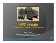1.WNS update January_2012.pptx - Bats and Wind Energy ...