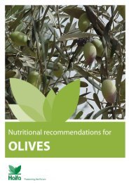 Crop Guide: Nutritional recommendations for Olives - Haifa-Group