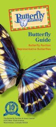 Download a butterfly guide - Butterfly Pavilion