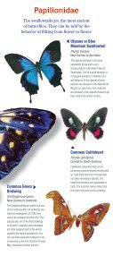 Download a butterfly guide - Butterfly Pavilion - Page 2