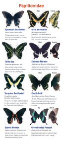 Download a butterfly guide - Butterfly Pavilion - Page 3