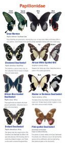 Download a butterfly guide - Butterfly Pavilion - Page 4