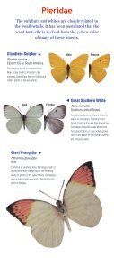 Download a butterfly guide - Butterfly Pavilion - Page 5
