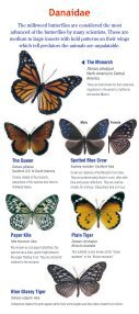 Download a butterfly guide - Butterfly Pavilion - Page 6