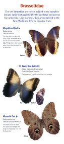 Download a butterfly guide - Butterfly Pavilion - Page 7