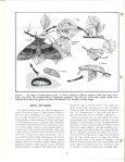 Growing Moths - Cornell University - Page 6
