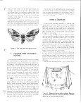 Growing Moths - Cornell University - Page 7