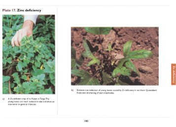 Acknowledgements first for Soil zinc deficiency