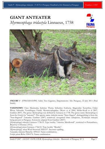 GIANT ANTEATER Myrmecophaga tridactyla ... - FAUNA Paraguay
