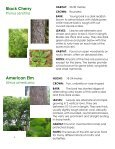 Frink Centre Tree Guide - Quinte Conservation - Page 6